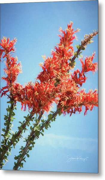 Ocotillo In Bloom Metal Print