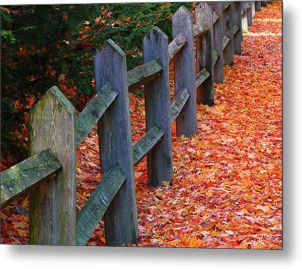 October Light Metal Print by Juergen Roth