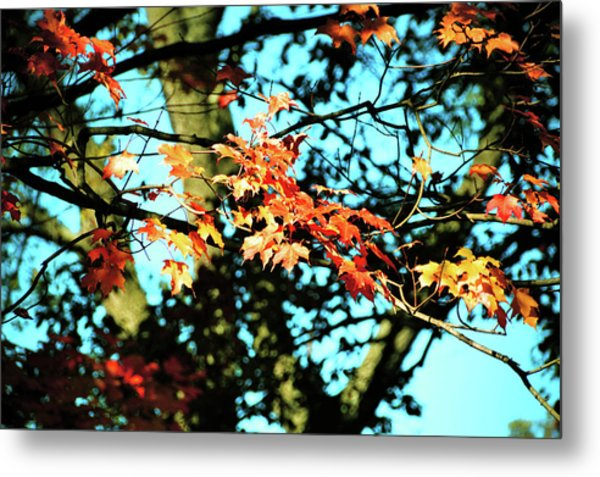 October Road Metal Print by JAMART Photography