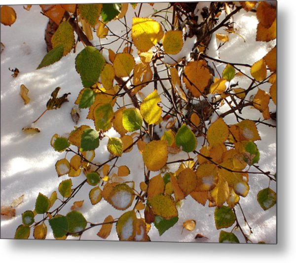 October Snow Metal Print by Marilynne Bull