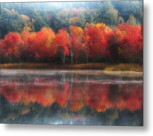 October Trees - Autumn  Metal Print
