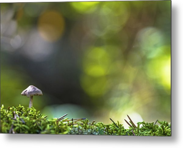 Ode To A Mushroom Metal Print