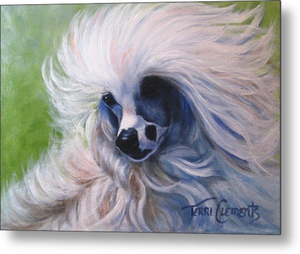 Odin In The Breeze Metal Print by Terri Clements