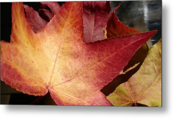 Of Fall Metal Print by Frederick Messner