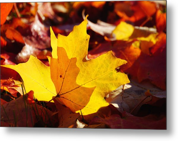 Of Light And Leaves Too Metal Print