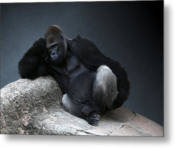 Off Duty Gorilla Metal Print