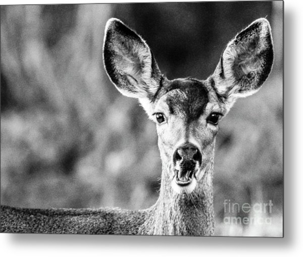 Oh, Deer, Black And White Metal Print