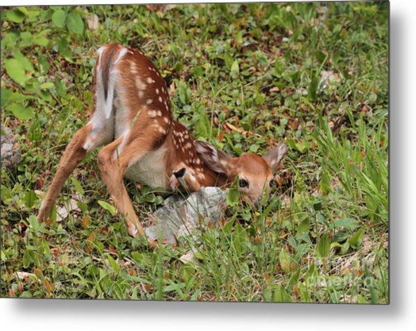 Oh Deer Little Fawn Metal Print