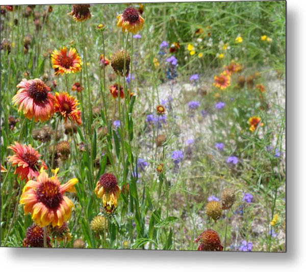 Oh Hi Orange Red Purple Flowers Metal Print