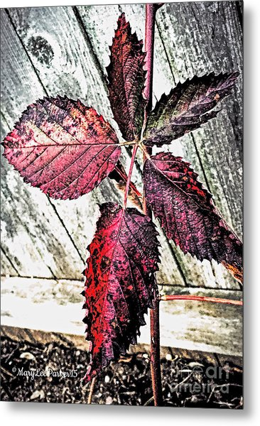 Old And  Faded Metal Print