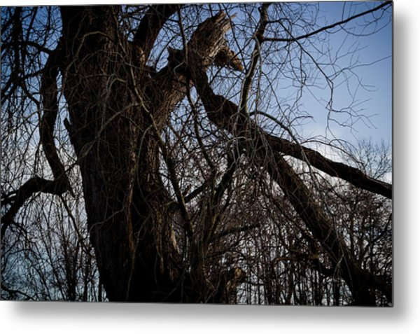 Old And Gnarly Metal Print