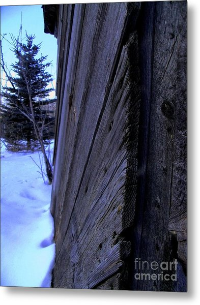 Old And Young Spruce Metal Print by The Stone Age
