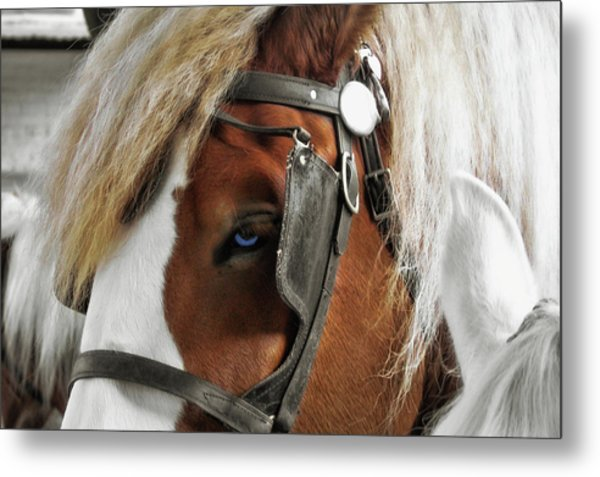 Old Blue Eyes Savannah Metal Print by JAMART Photography