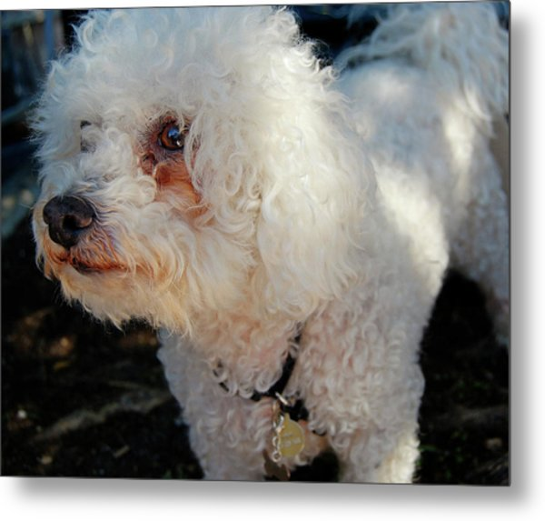 Old Buddy Metal Print by JAMART Photography