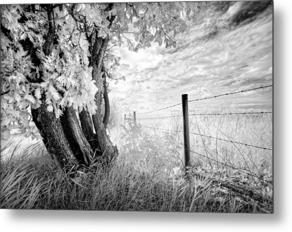 Old Cedar And Barbed Wire Metal Print
