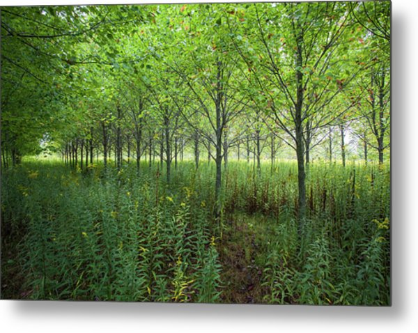 Metal Print featuring the photograph Old Field Sentinels by Lon Dittrick