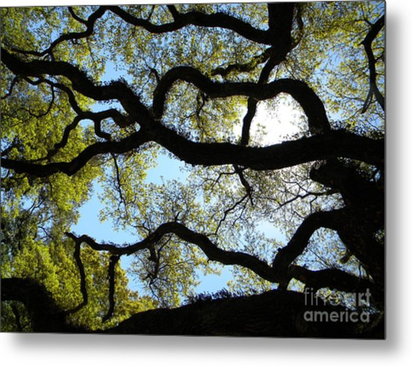 Old Oak Metal Print by JoAnn Wheeler