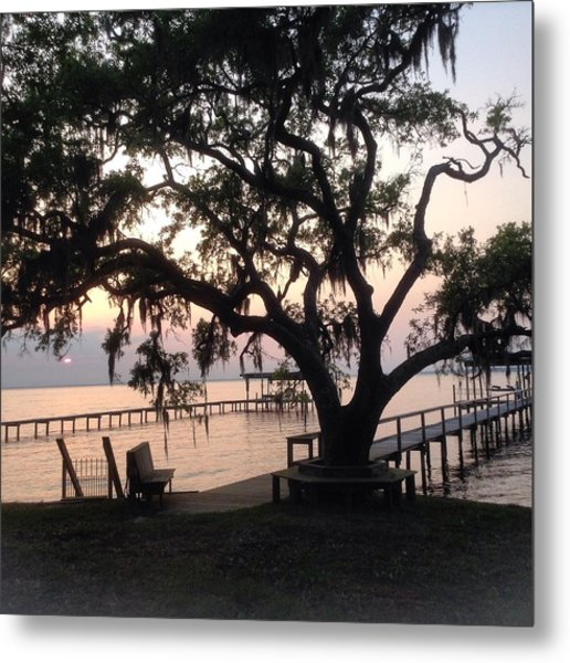 Old Tree At The Dock Metal Print
