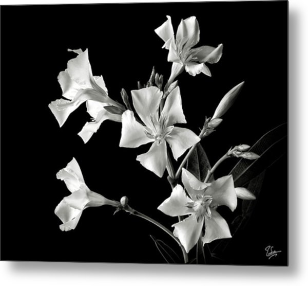 Oleander In Black And White Metal Print