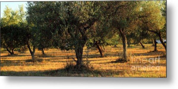 Olive Grove 3 Metal Print