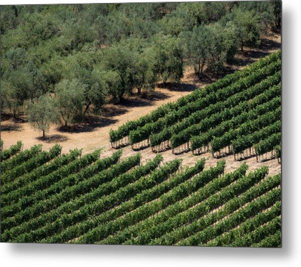 Olive Grove Meets Vineyard Metal Print