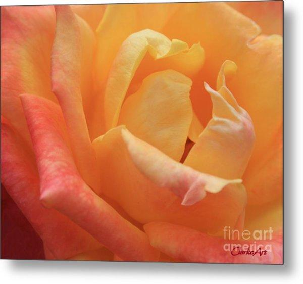 Ombre Rose Metal Print