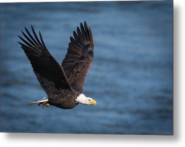 On A Mission Metal Print