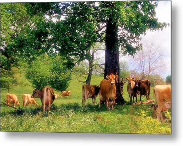 On Emerald Pastures Metal Print by Jan Amiss Photography