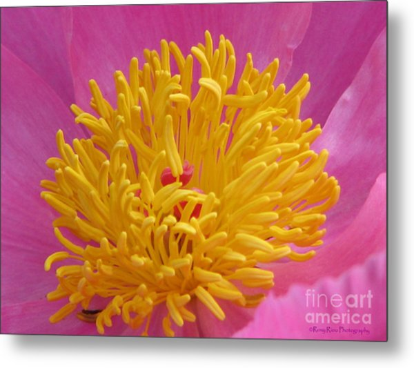 On The Inside Metal Print by Roxy Riou