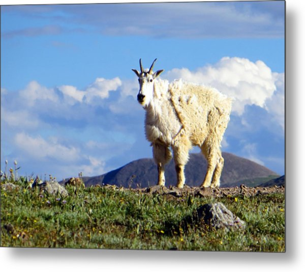On The Mountain Top Metal Print