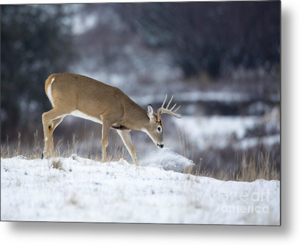 On The Move Metal Print