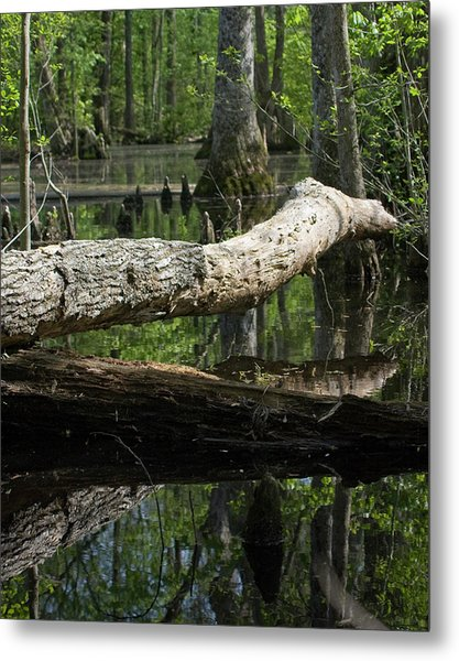 On The Swamp Metal Print by Alan Raasch