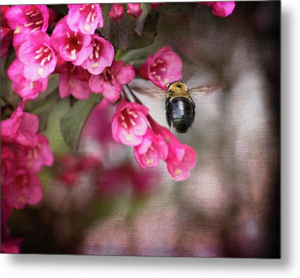 On Wine And Roses Weigela - 2 Metal Print