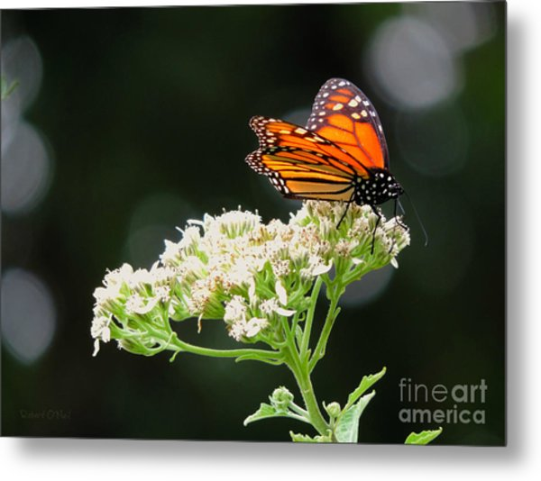 Once Upon A Butterfly 005 Metal Print