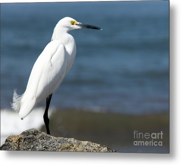 One Classy Chic Wildlife Art By Kaylyn Franks Metal Print