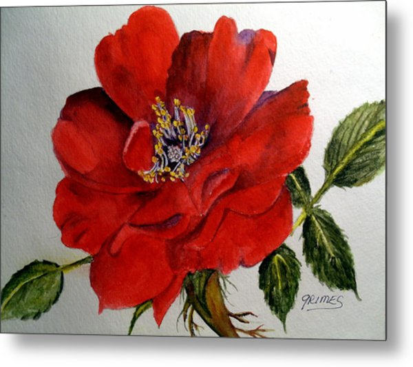 One Lone Wild Rose Metal Print
