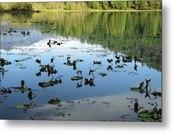 One Mile Lake Reflections 1 Metal Print by Walter Fahmy