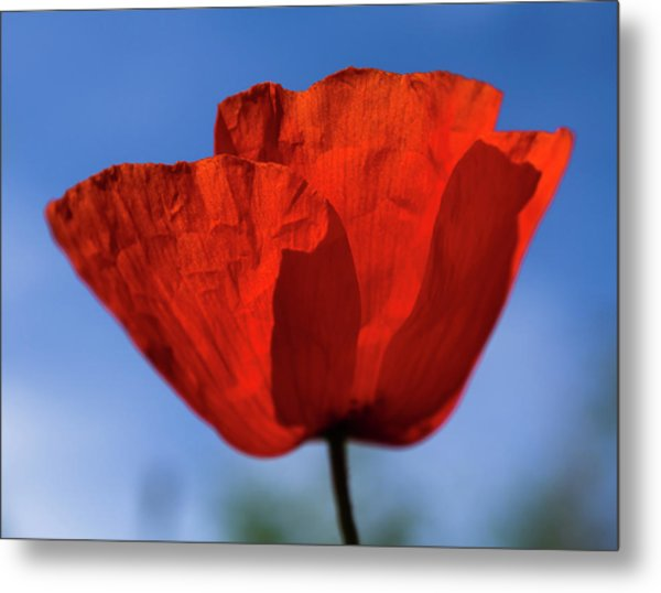 One Red Poppy Metal Print