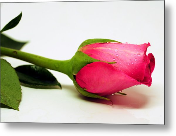 One Single Rose Metal Print
