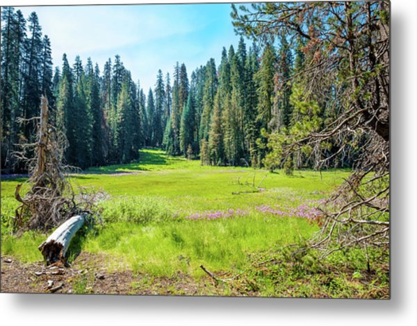 Open Meadow- Metal Print