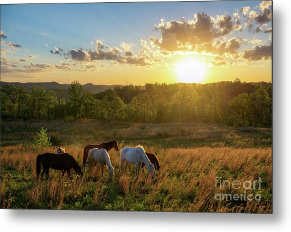 Open Spaces Metal Print