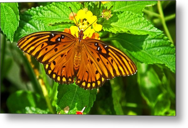Open Wings Metal Print