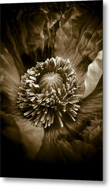Opium Poppy Papaver Somniferum Metal Print by Frank Tschakert