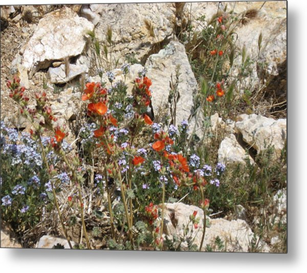 Orange And Blue Flowers Metal Print by Joan Taylor-Sullivant