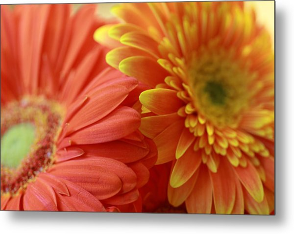 Orange And Yellow Daisies Metal Print