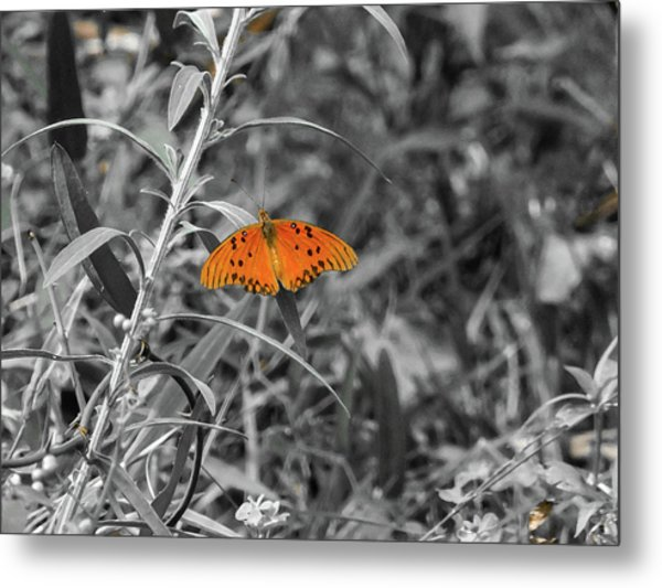 Orange Butterfly In Black And White Background Metal Print