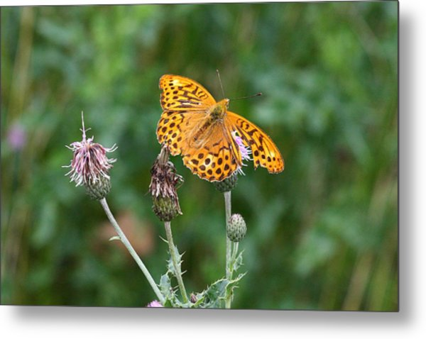 Orange Butterfly Metal Print by Pierre Leclerc Photography