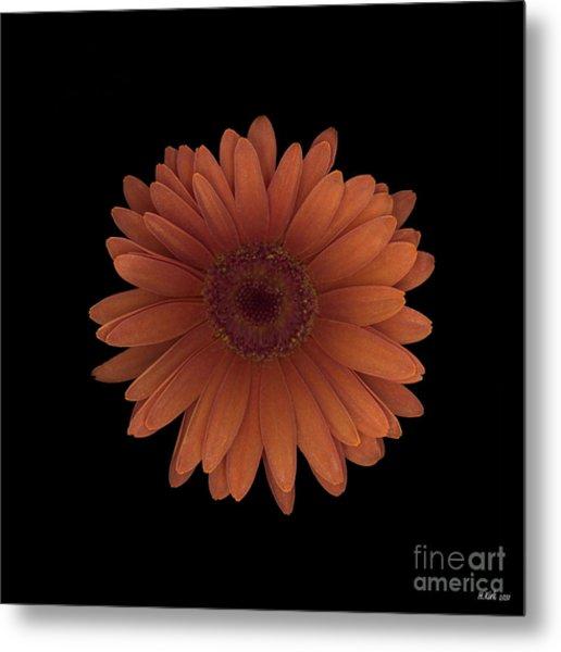 Orange Daisy Front Metal Print