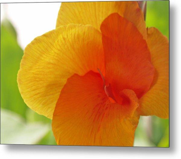 Orange Flower Metal Print by James Granberry