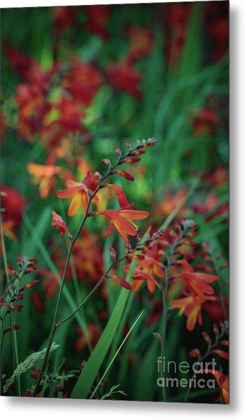 Orange Flowers 8 Metal Print